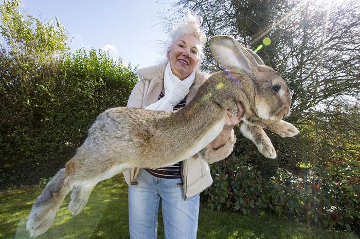 Découvrez Darius, le plus gros lapin du monde ! 6