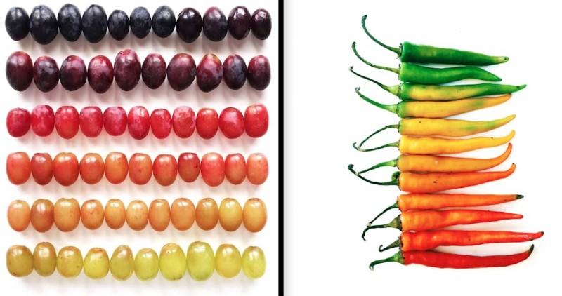 Des fruits et légumes hauts en couleurs 16