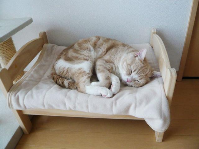 Les chats ont aussi droit à un lit douillet ! 2