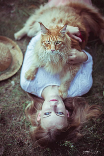 maine-coon-chats-8