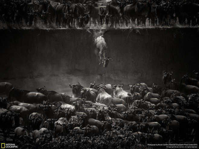 national-geographic-chakipet11