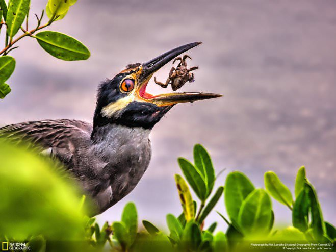 national-geographic-chakipet17