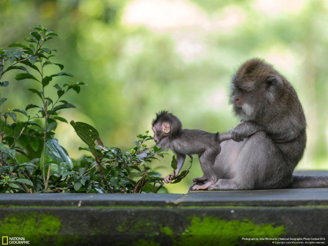national-geographic-chakipet24