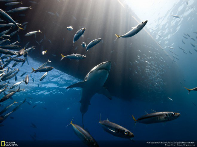 national-geographic-chakipet9