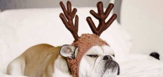 Les animaux aussi fêtent Noël ! 19