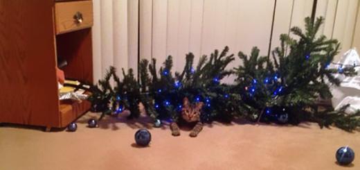 Ces 14 chiens et chats détestent Noël ! 2