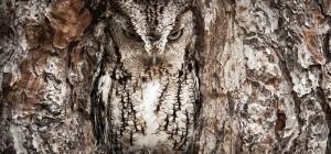 Incroyable : 15 chouettes camouflages de hiboux 16