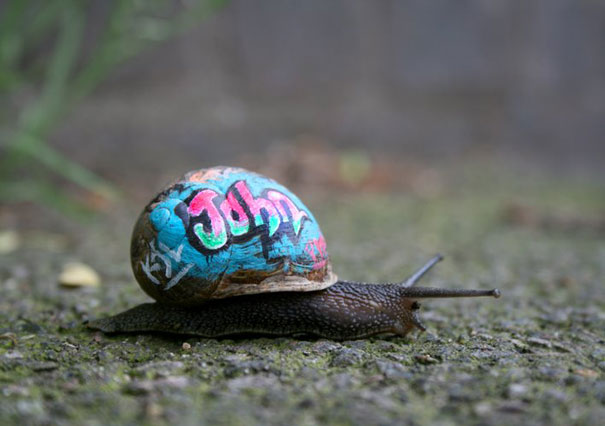 painted-snail-shell-6