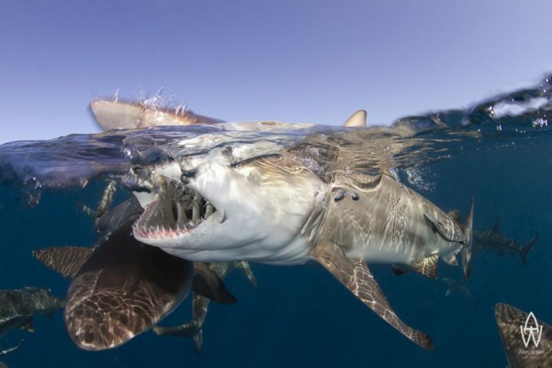photo sous l'eau12