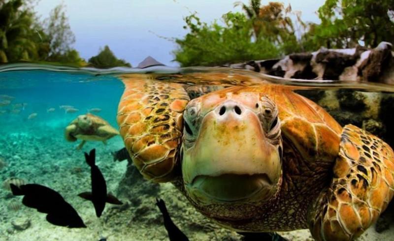 photo sous l'eau24