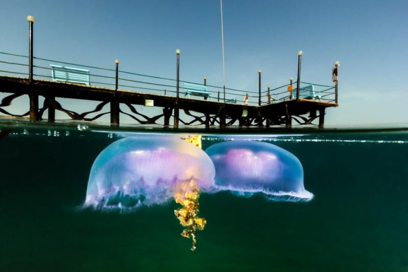 photo sous l'eau33