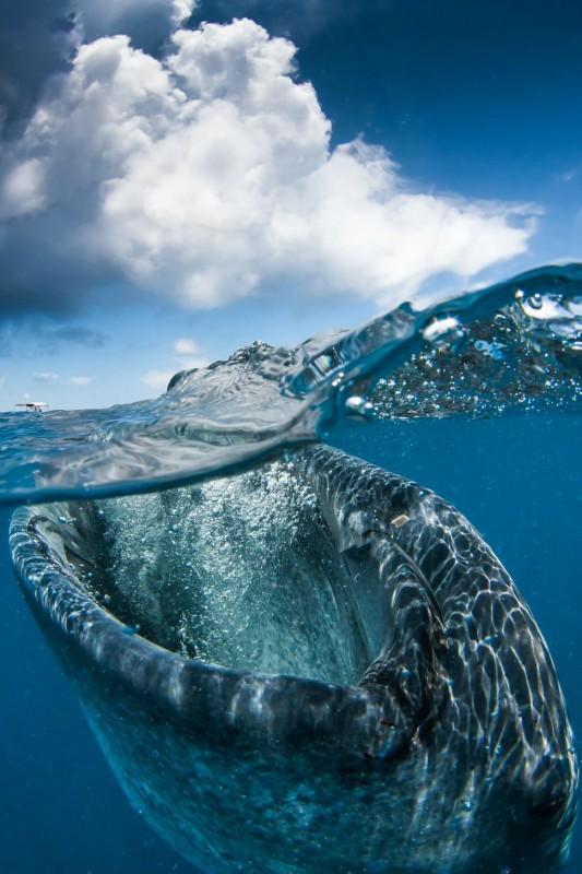 photo sous l'eau4