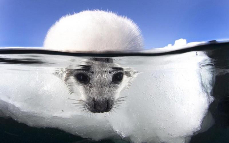 photo sous l'eau6