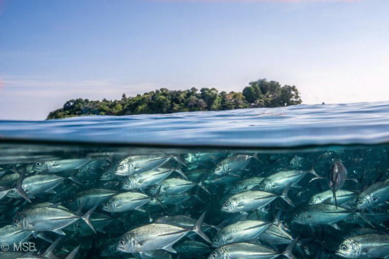 photo sous l'eau7