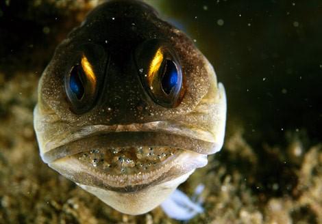 photos sous l'eau 10