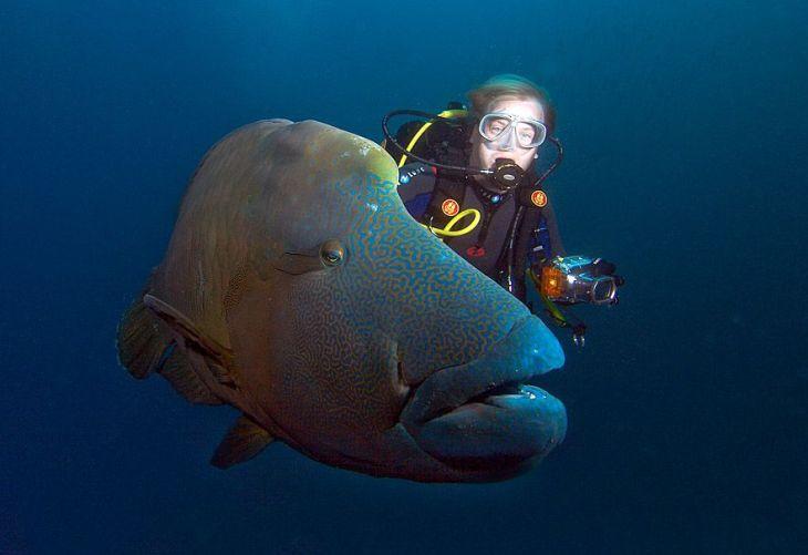 photos sous l'eau 13