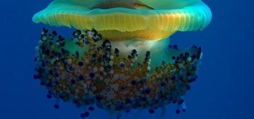 Découvrez les fonds marins en 24 photos incroyables 15