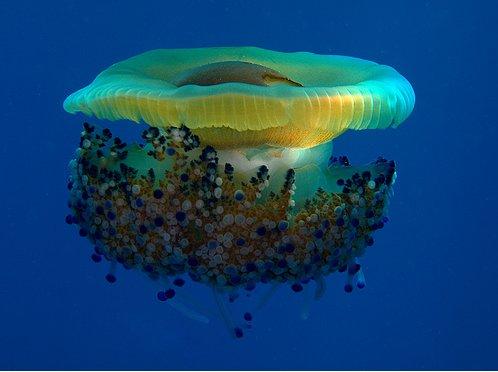 photos sous l'eau 14