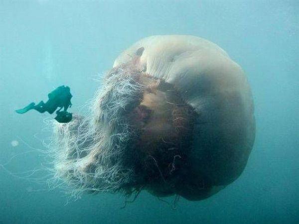 photos sous l'eau 16