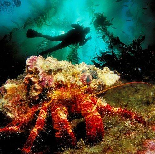 photos sous l'eau 18