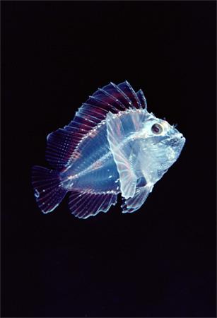 photos sous l'eau 21