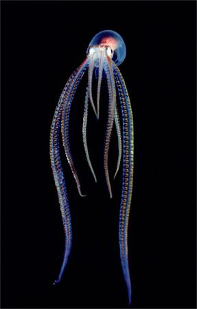 photos sous l'eau 22