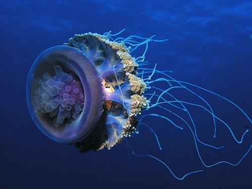 photos sous l'eau 23