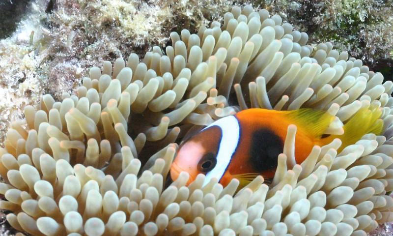 photos sous l'eau 4