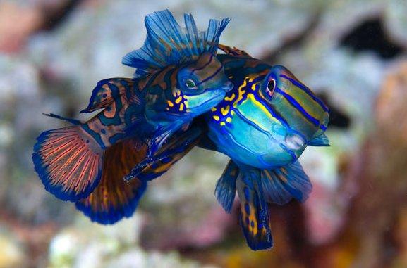photos sous l'eau 8