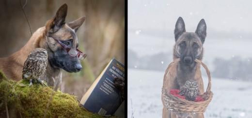 Une amitié improbable entre un chien et une chouette 15