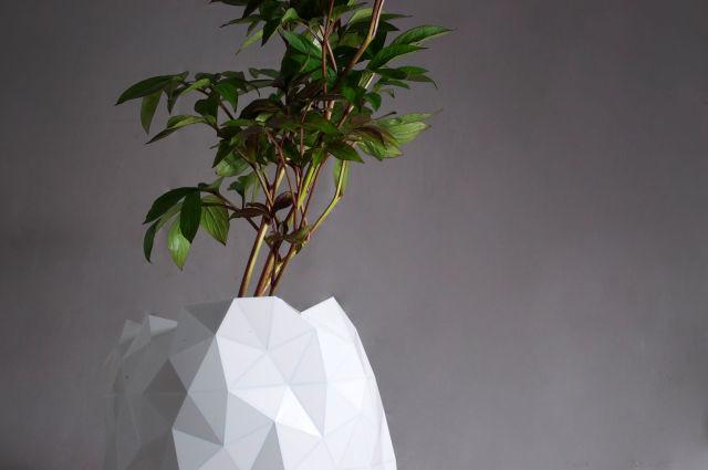 pot-evolution-plante-2