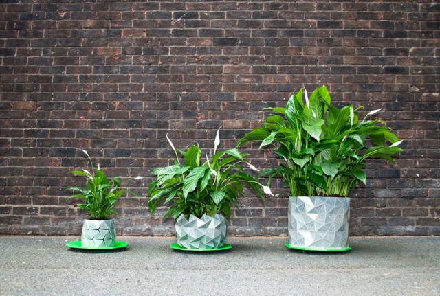 pot-evolution-plante-3