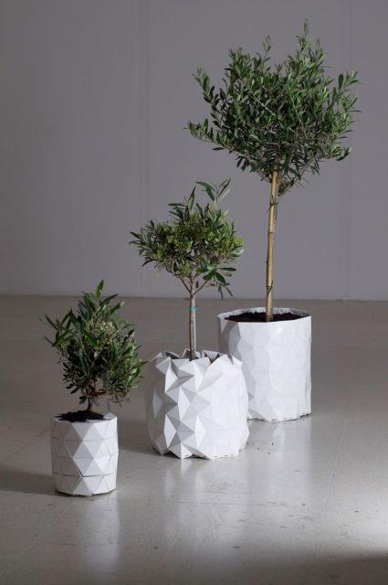 pot-evolution-plante-4