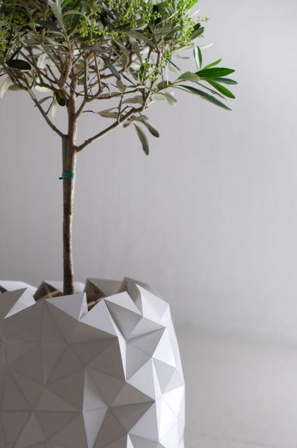 pot-evolution-plante-5