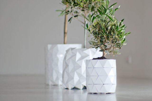pot-evolution-plante-6