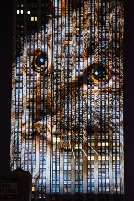 projection-empire-state-espece-animale-10