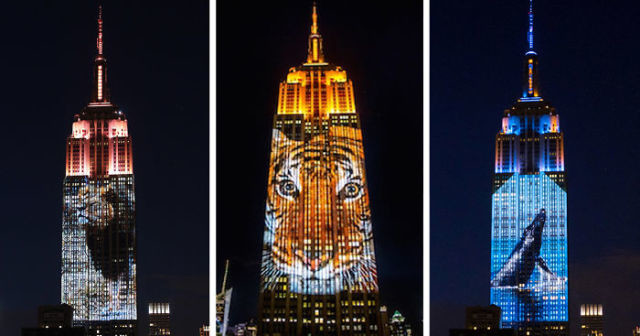 projection-empire-state-espece-animale-14