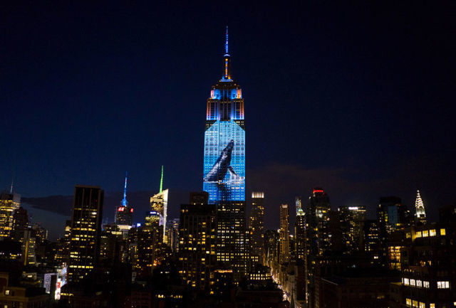 projection-empire-state-espece-animale-3