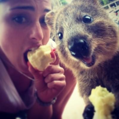 quokka-selfie-chakipet11