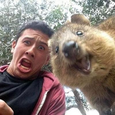 quokka-selfie-chakipet13