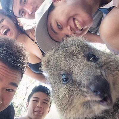 quokka-selfie-chakipet5