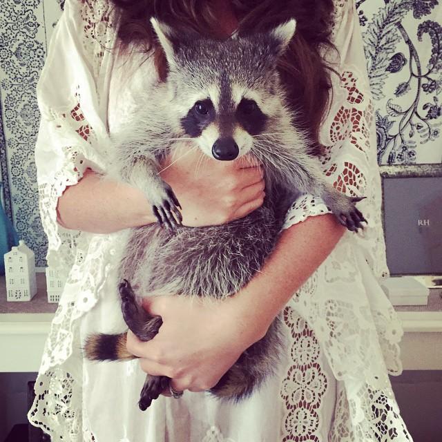 raton-laveur-chien-7
