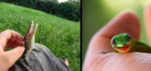 ETONNANT : ces petits reptiles ne devraient pas vous laisser indifférent ... 17