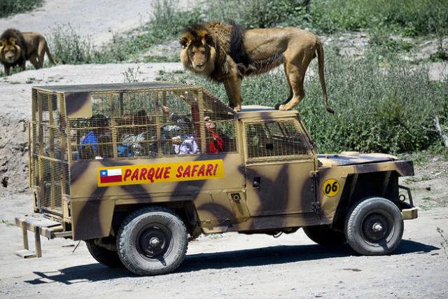 Ce nouveau concept de safari est étonnant ! 2