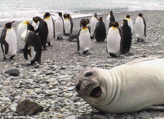Nos amis les bêtes succombent eux aussi à la mode du selfie : juste GENIAL ! 3