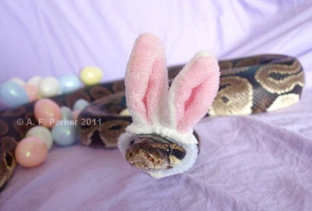 serpent-drole-chapeau-11