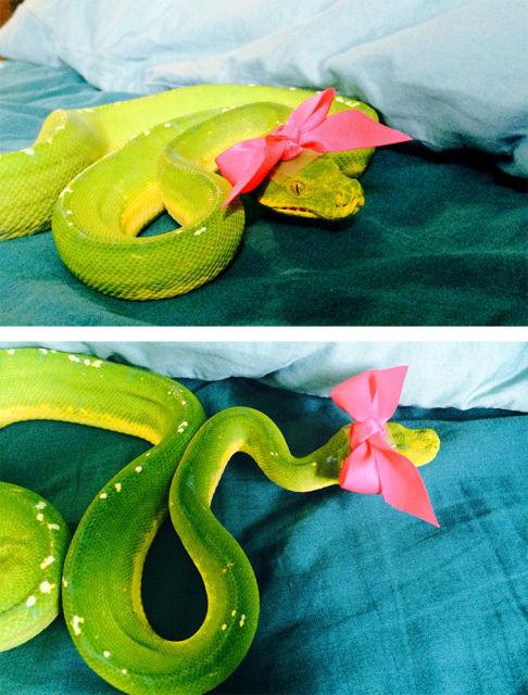 serpent-drole-chapeau-13
