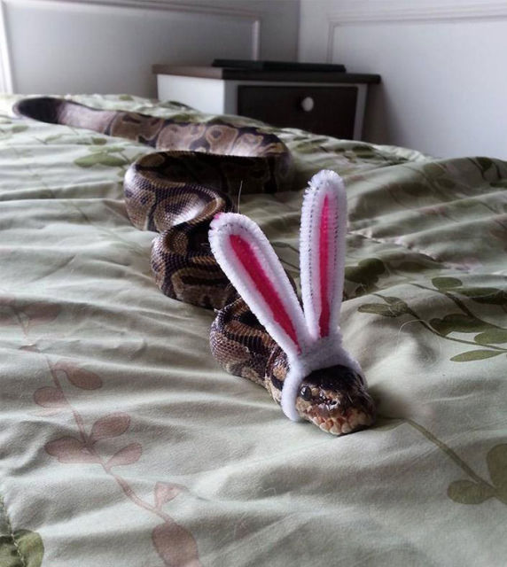serpent-drole-chapeau-15
