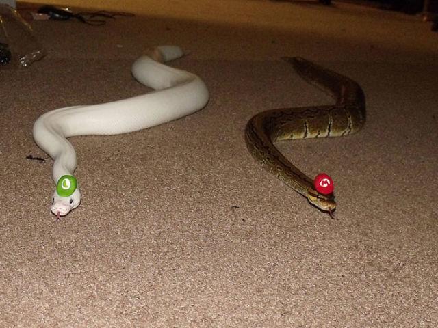 serpent-drole-chapeau-2