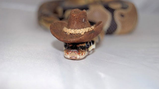 serpent-drole-chapeau-3